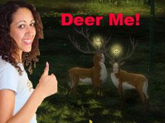 The Zen of Deer