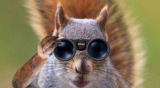 The Squirrel Empire Strikes Back