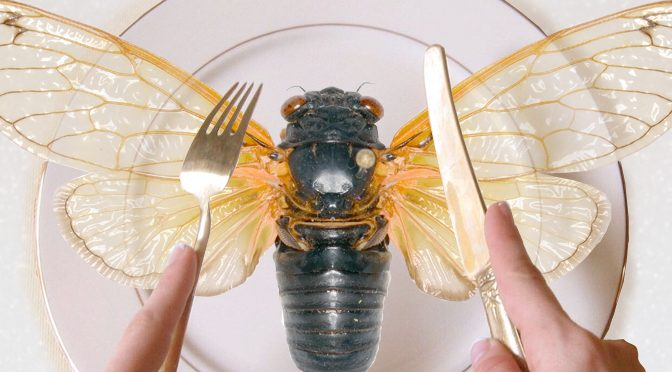 Listening to a Cicada Serenadea